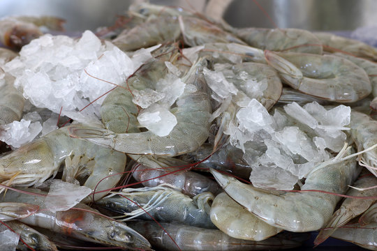 Fresh shrimps in seafood market for the background