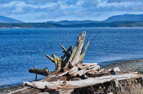 View of Puget Sound and San Juan Islands and Mountains from Lopez Island Beach
