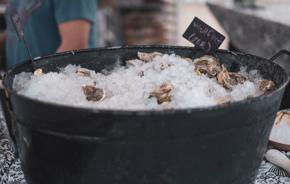 Local New England oysters on ice in a bucket outside