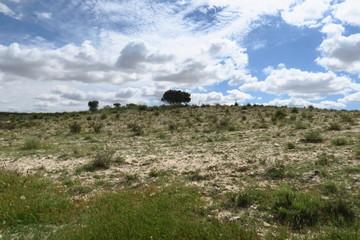 Colline de pierre avec arbres u sommets