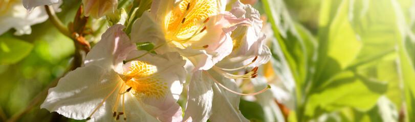 Blumen 1065