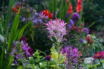 Blumen 1086