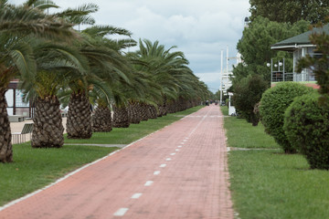 Bicycle path between green palms on the embankment of Batumi