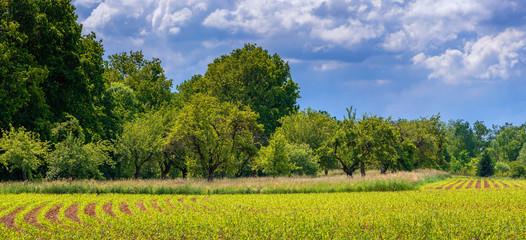 Wunderschöne Agrarlandschaft im Frühsommer