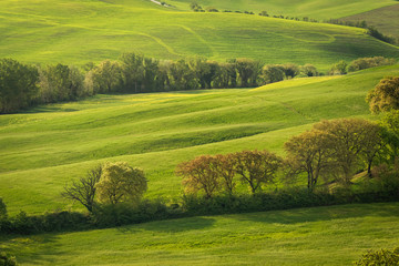 Spring view of typical Italian field at the morning with sunlight on the grass and trees