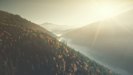 Multicolored Highland Forest Fog Slope Aerial View. Wild Nature Habitat Misty Evergreen Coniferous Cliff Forestry Overview. Tranquil Beauty Scenery Clean Ecology Concept Drone Flight