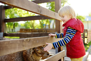 Little boy petting sheep. Child in petting zoo. Kid having fun in farm with animals. Children and animals.
