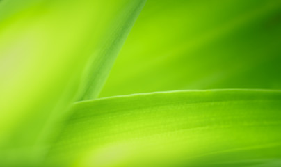 Closeup of nature green leaf and sunlight with greenery blurred background use as decoration ecology environment , fresh wallpaper concept. - Image Wall mural