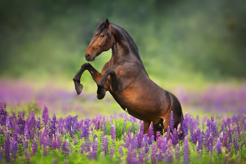 Foto op Canvas Paarden horse running in a field