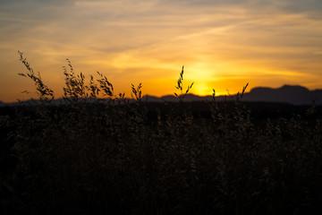 Sonnenuntergang in Mallorca / Mohnfeld vor dem Gebirgszug der Sierra de Tramuntana