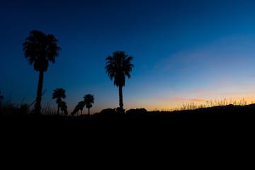 Sonnenuntergang mit Palme / Mallorca
