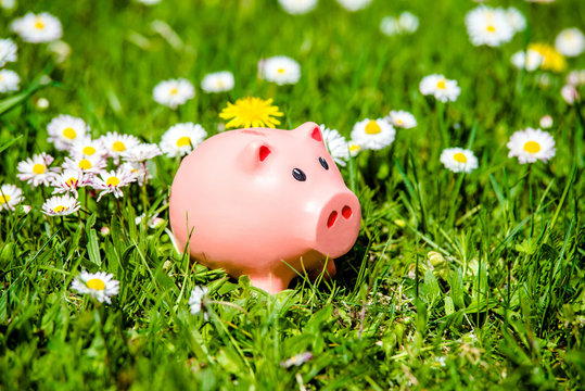 Piggy Bank on the background of blooming daisies