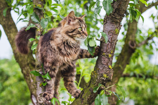Fluffy striped cat on a tree in the middle of a green leaf. The cat climbs the tree_