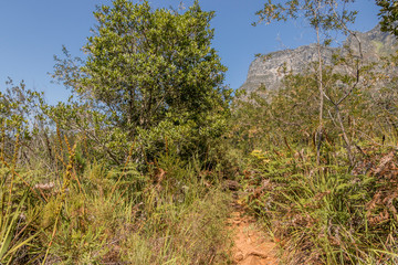 Hiking trail and mountain view in the Tablemoutain National Park, Cape Town, South Africa.