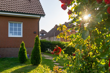 garden and house, bush of roses in a backlight scene during sunset
