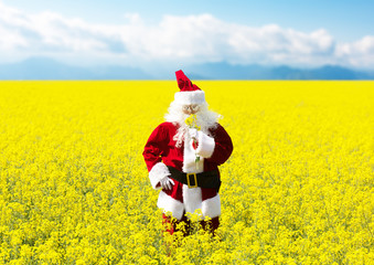 Christmas Santa Claus sniffing the flowers in blooming yellow field. Spring vacation concept.
