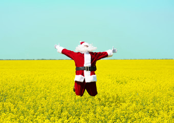 Christmas Santa Claus jumping in blooming yellow field. Spring vacation concept.