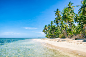 Palm trees swaying along an empty tropical Brazilian island beach on a remote island in Bahia Brazil