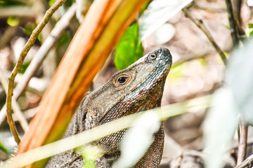 closeup of a lizard, photo as a background