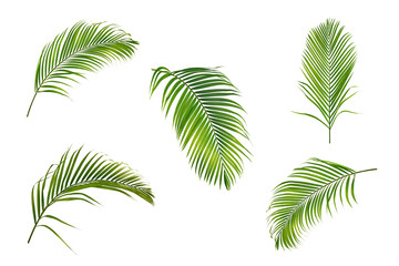 Foto op Canvas Palm boom Collection of palm leaves isolated on white background