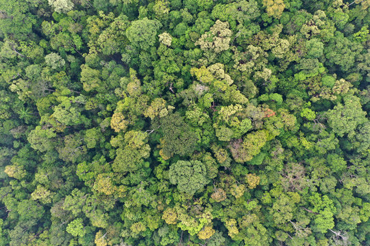 Rainforest trees forest aerial photo