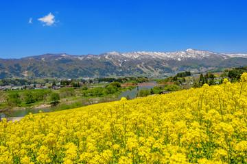Foto op Canvas Meloen 一面に咲く菜の花畑,日本の長野県飯山市
