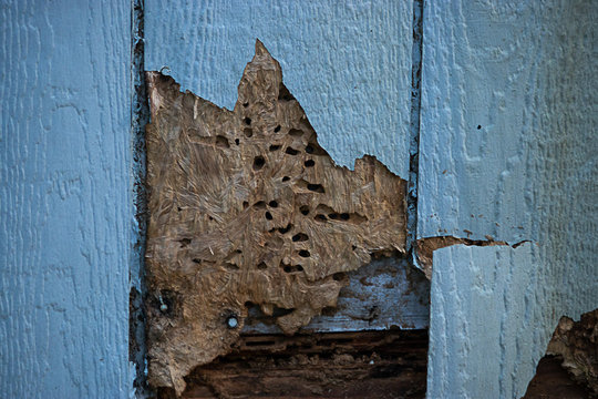 termite and weather damage done to siding