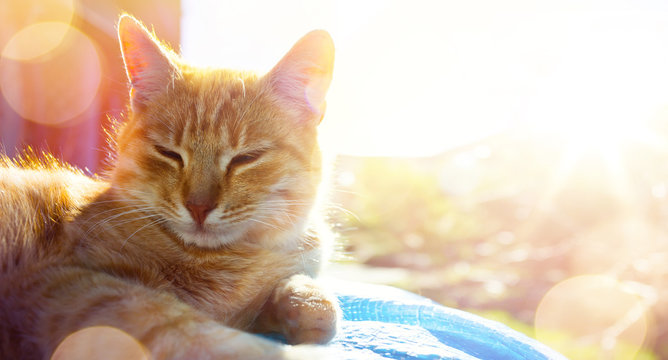 summer relax;  happy cat gets pleasure basking in the summer sun