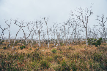 White and grey trees at the Great Ocean Road