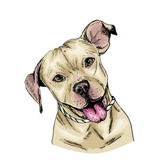 Vector portrait of pit bull terrier dog. Cute puppy. Animalistic illustration. Hand drawn pet portait. Poster, t-shirt print, holiday, postcard, shelter.