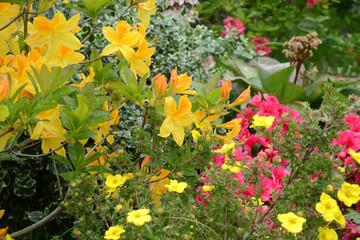 Blumen 1083