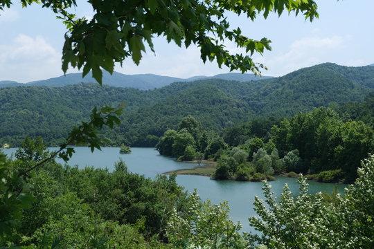 City Forest Of Yalova - Turkey
