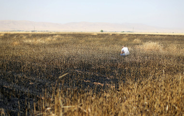 A man checks a burnt wheat field in Qamishli