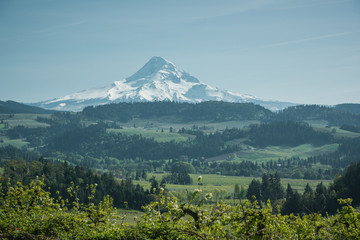 Mt Hood dominating the landscape over the Hood River Valley, Oregon, on a perfect summer afternoon