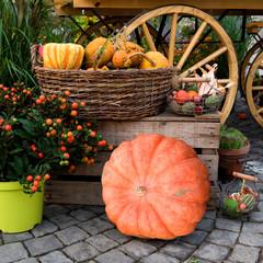 Wochenmarkt, Gemüse, Marktstand