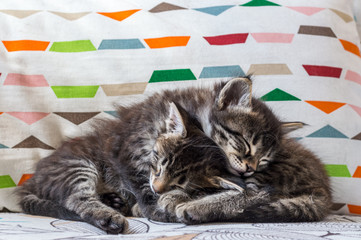 Two little tabby kittens sleeping together on armchair