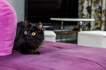 Scared young black cat with green eyes hiding on the armchair