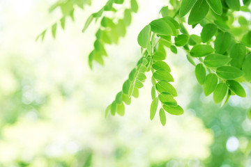 Background of green leaves, summer