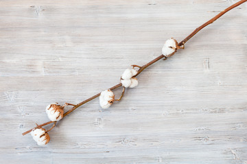 top view of dried branch of cotton plant on gray