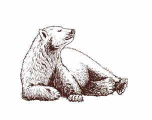 Graphical vector illustration of Polar bear  , vintage background