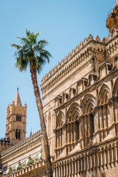 Mediterranean cathedral and palm tree, in the city