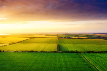Aerial view on the field during sunset. Landscape from drone. Agricultural landscape from air. Agriculture - image Fototapete