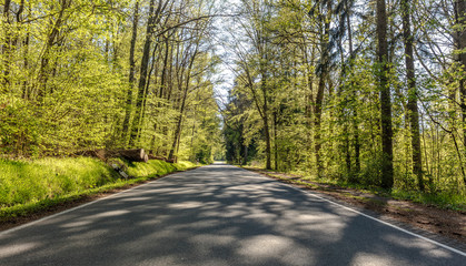 Country road in the beech forest