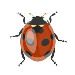 Ladybug. Vector clipart isolated on white background.