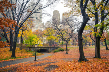 Wall Mural - Central park at rainy morning, New York City, USA