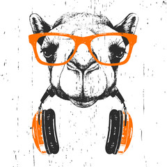 Portrait of Camel with glasses and headphones. Hand-drawn illustration. T-shirt design. Vector
