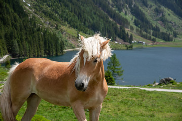 horse with lake and mountains in the background