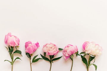 Five pink peony flowers with short stems and green leaves on white background. Photo with copy blank space.