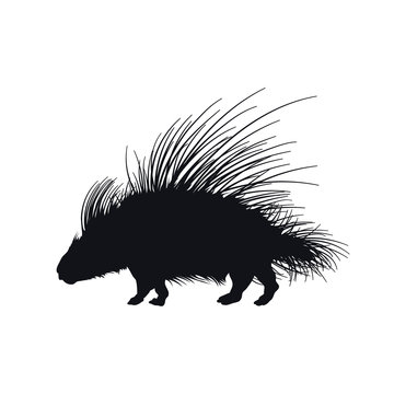Black silhouette of african porcupine on white background. Isolated hedgehog icon. Wild animals of Africa. Savannah nature