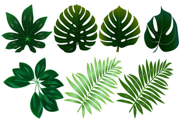 group of tropicals leafs in white background